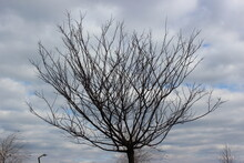 Sleeping Tree On The Background Of Cloudy Autumn Sky