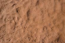 The Tracks Of Birds Were Impri...