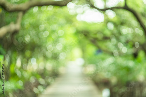 Valokuvatapetti Nature view of green leaf on blurred greenery background in garden with copy space using as background natural green plants landscape, ecology, fresh wallpaper concept
