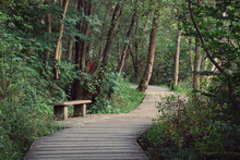 Wooden Walkway And Bench Surro...