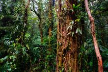 Thick Rainforest