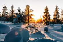 Sunrise In Winter Forest