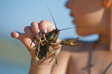 A Boy Holding A Crayfish, Clos...