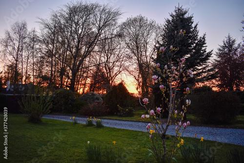 Fototapeta Vibrant Sunrise Against Tree Silhouette obraz na płótnie