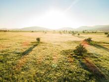 Golden Sunlight Shining Over Farm Paddock With Long Green Grass