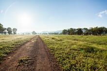 Farm Driveway In The Morning W...