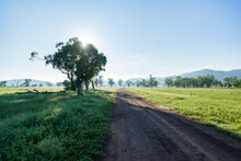 Shadows And Light Of Gum Trees Beside Gravel Country Road