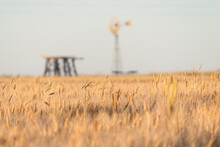 A Windmill And Wooden Tank Sta...