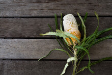 Banksia Flower On A Timber Table