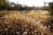 Early Sun Through Carpet Of Wildflowers