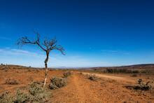 Dead Tree By Dirt Road