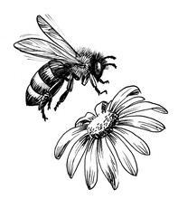 Flying Honey Bee And Blossoming Flower. Ink Black And White Drawing