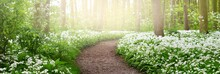 Pathway Through The Forest Wit...