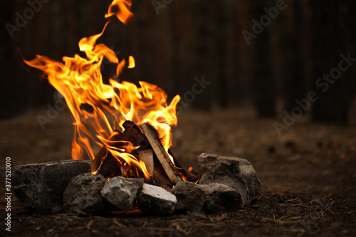 Canvas Beautiful bonfire with burning firewood in forest