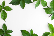 Frame Made Of Green Leaves On A White Background. Top View, Copy Space, Flat Lay