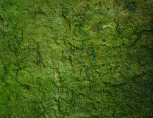 Wet Slate Stone Texture With Green Algae Moss / Sludge. Grunge Natural Rock Texture Background Wallpaper.