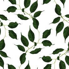 Green Ficus Rubber Plant Branch Leaf Seamless Pattern Texture Background Vector Art