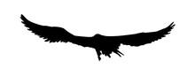 Black Silhouette Eagle, Falcon...