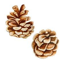 Watercolor Illustration Of Christmas Two Pine Cones