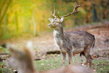 Portrait Of A Deer In The Wood...