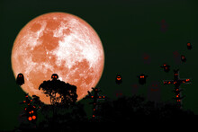 Full Harvest Blue Moon And Silhouette Top Tree On Night Sky