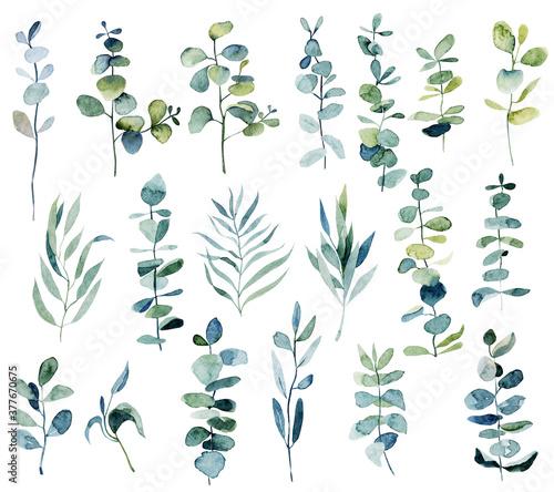 Fototapeta Collection of watercolor eucalyptus branches, botanical elements isolated on white background obraz na płótnie
