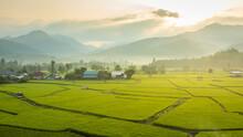 Beautiful Green Rice Fields Co...