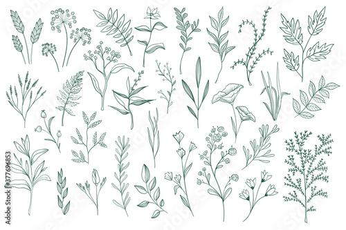 Fotografia Floral decorative elements set