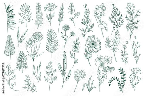 Slika na platnu Wildflower decorative outline elements set