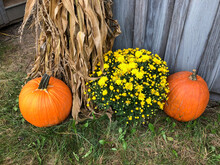 Fall Display With Core Stalks,...