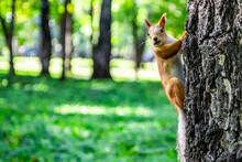 Cute Fluffy Squirrel Sits On ...