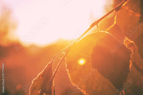 Papel de parede Leaf under the rays of the morning sun