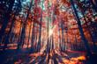 sun ray sin autumn forest