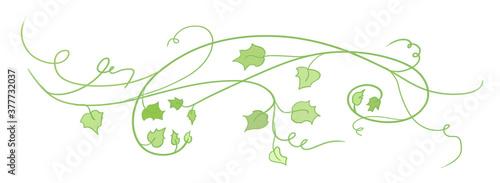 pumpkin vines leaves and curls in autumn or halloween design element, cute autum Fototapeta