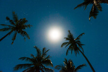 Palm Trees Under Dark Blue Night Sky With Full Moon And Many Stars