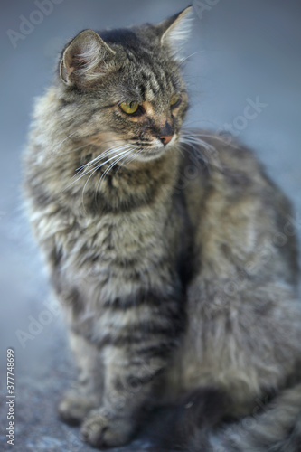 Portrait of wild fluffy cat
