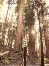 Speed Limit Sign Sequoia National Park