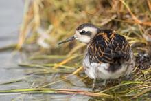 XXX ,wildlife In Iceland