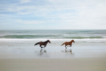Two Wild Horses On The Beach In Corolla On North Carolina Outer Banks