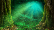 Sunlight In Forest Magical Woo...