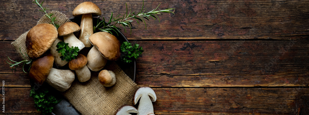 Fototapeta Fresh forest mushrooms /Boletus edulis (king bolete) / penny bun / cep / porcini / mushroom in an old bowl / plate and rosemary parsley herbs on the wooden dark brown table, top view background banner