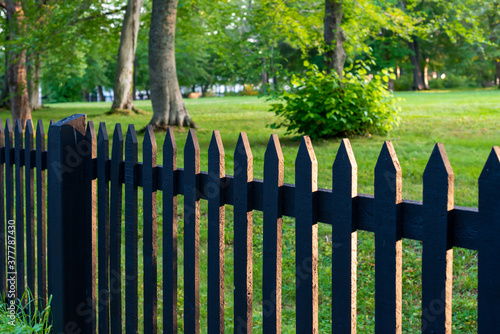 Fotografie, Obraz A black wooden picket fence with green grass, large trees and lush shrubs in a garden