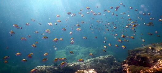 Fototapeta na wymiar Costa Rica Pacific sea life