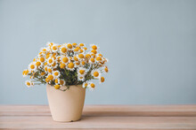 Bouquet Of Fresh Chamomile Flowers In Vase On Table Against Grey Background
