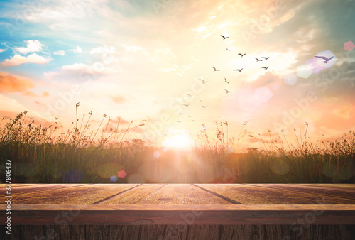 Photo World environment day concept: Wooden floor and birds flying on beautiful meadow