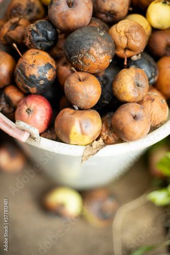 Obraz na plátně Rotten apples in a white plastic bucket