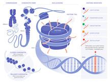 Epigenetics Illustration - Technical