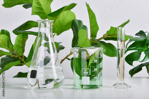 Natural drug research, Plant extraction in scientific glassware, Alternative green herb medicine, Natural organic skincare beauty products, Laboratory and development concept.