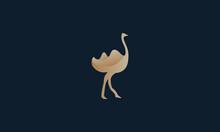 Animal Bird Ostrich Or Bird Ca...