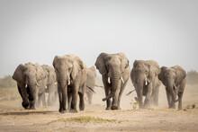Elephant Herd Walking Towards Camera In Savuti In Botswana